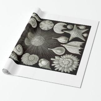 Papel de embalaje de las cáscaras de Ernst Haeckel