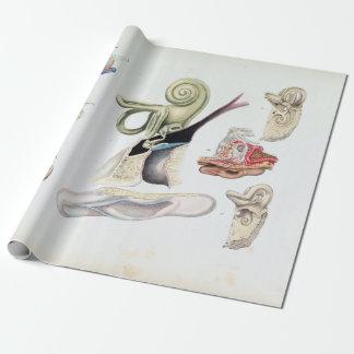 Papel De Regalo Anatomía del vintage del oído humano