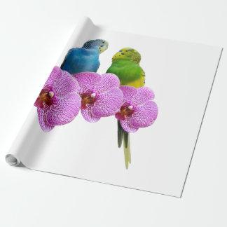 Papel De Regalo Budgie con la orquídea púrpura