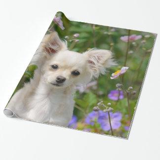Papel De Regalo Foto poner crema de pelo largo linda del mascota