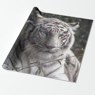 Papel De Regalo Primer blanco del tigre