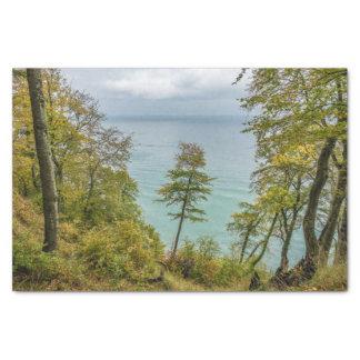 Papel De Seda Bosque costero en la costa de mar Báltico