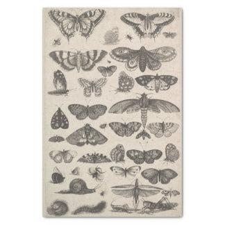 Papel De Seda Insectos Decoupage de los lepidópteros de la