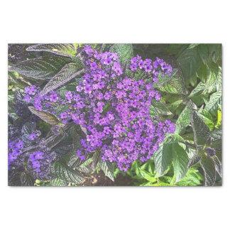 Papel De Seda La lila púrpura salvaje florece el arbusto de la