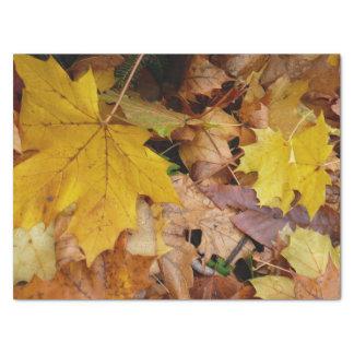 Papel De Seda Naturaleza amarilla caida del otoño de las hojas