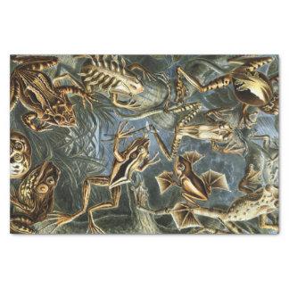 Papel De Seda Variedad de Ernst Haeckel de ranas exóticas: