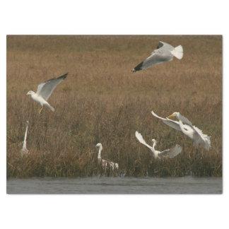 Papel de WetlandTissue de la fauna de los pájaros