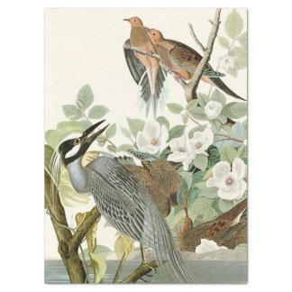 Papel seda de las flores de Audubon de los pájaros