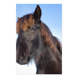 Papelería Cabeza del retrato del caballo negro del Frisian