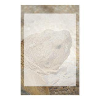 Papelería cierre de la cabeza de la tortuga encima de la