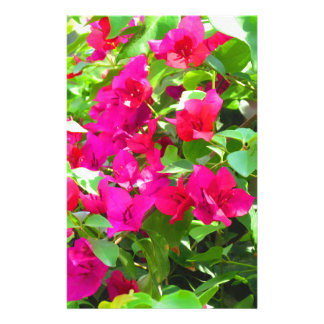 Papelería Emblema floral del bougainvillea de la flor del