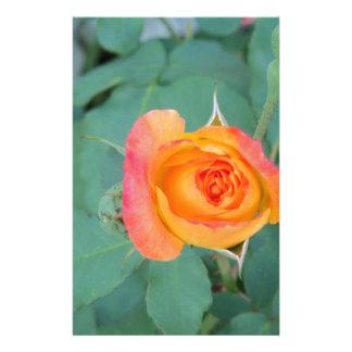 Papelería flor anaranjada del rosa amarillo
