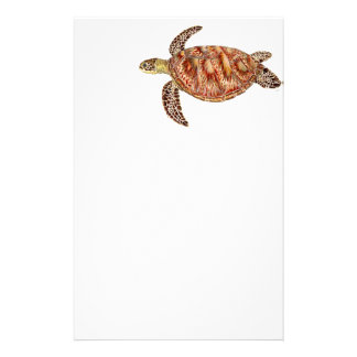 Papelería Green turtle - Tortuga verde Chelonia mydas