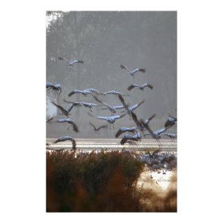 Papelería Grúas del vuelo en un lago