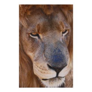 Papelería Historia de los leones en Suráfrica