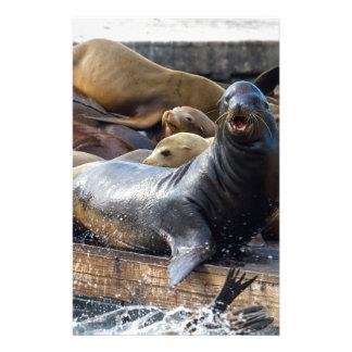 Papelería Leones marinos en el dique flotante en San