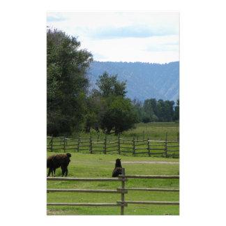 Papelería Llamas pastadas en un valle de la montaña