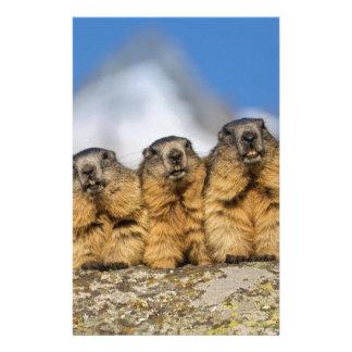Papelería Marmotas alpinas