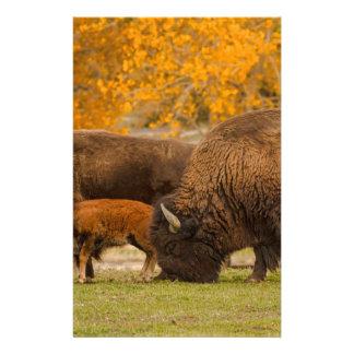Papelería Nación de la familia del bisonte