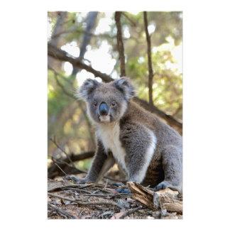 Papelería Oso de koala gris y blanco