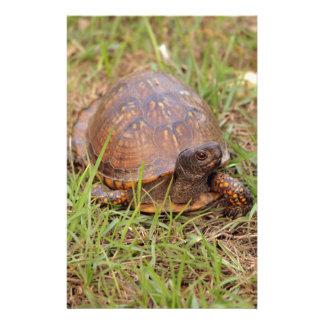 Papelería Tortuga de caja del este (Carolina del Norte y