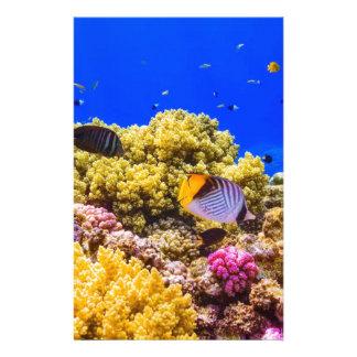Papelería Un arrecife de coral en el Mar Rojo cerca de