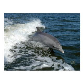 Para el amor de delfínes postal