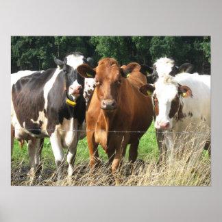 Para siempre regalo del poster de la vaca de los a
