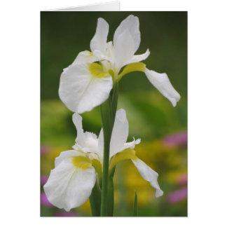 Pares blancos del iris tarjeta de felicitación