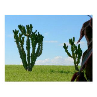 Pares de cactus en la playa postal