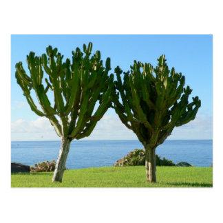 Pares de cactus postal