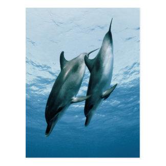 Pares de delfínes postal