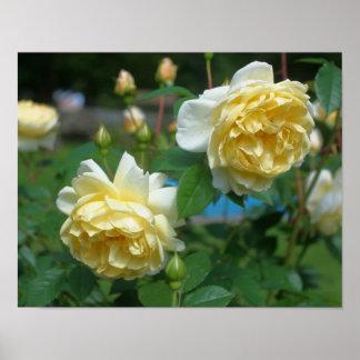 Pares de la flor del rosa amarillo poster