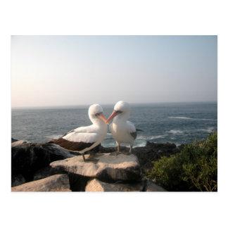 Pares de la gaviota en rocas postal