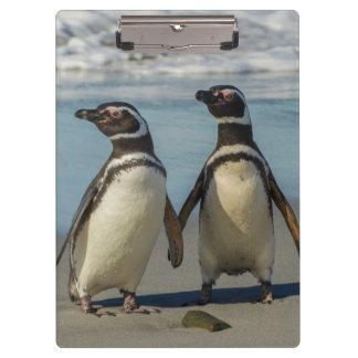 Pares de pingüinos en la playa carpeta de pinza