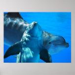 Pares de poster curioso de los delfínes