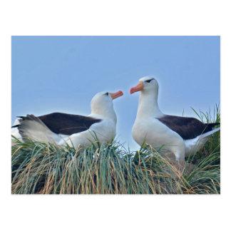 Pares del albatros en jerarquía postal