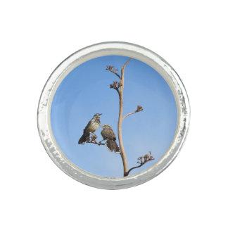 Pares del Wren de cactus Anillos Con Foto