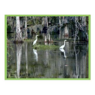 Pares lindos de garzas de Luisiana en agua cerca Postal