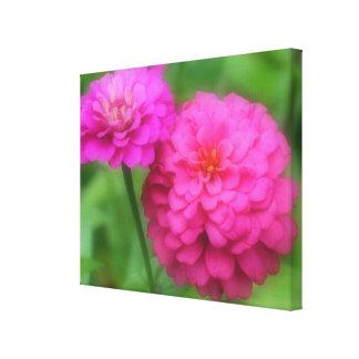 Pares rosados de la flor del Zinnia