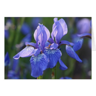 Pares siberianos del iris tarjeta de felicitación