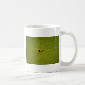 PARQUE NACIONAL AUSTRALIA DE PLATYPUS EUNGELLA TAZA DE CAFÉ