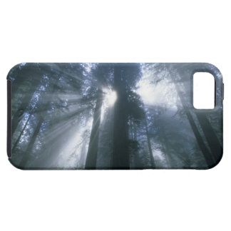 Parque nacional de la secoya, el condado de Del iPhone 5 Case-Mate Cobertura