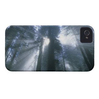 Parque nacional de la secoya, el condado de Del No Case-Mate iPhone 4 Cobertura