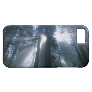 Parque nacional de la secoya, el condado de Del No iPhone 5 Carcasas