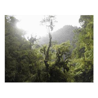 Parque nacional de Manu Postal