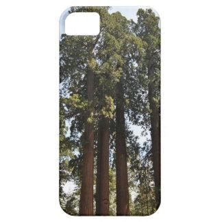 Parque nacional de Sequioa Funda Para iPhone SE/5/5s