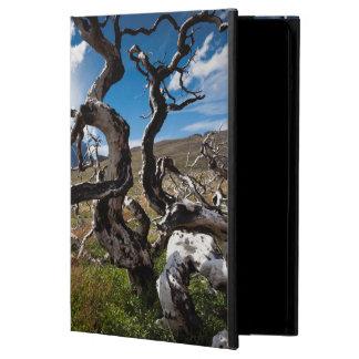 Parque nacional de Torres del Paine, árboles