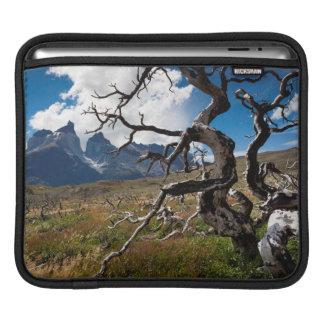 Parque nacional de Torres del Paine, árboles Fundas Para iPads