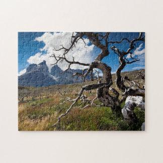 Parque nacional de Torres del Paine, árboles Rompecabezas